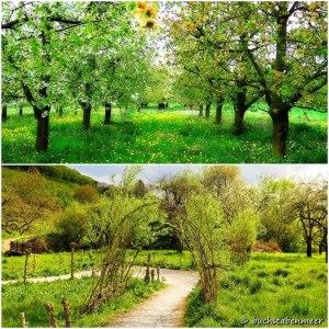 Apfelblütepfad