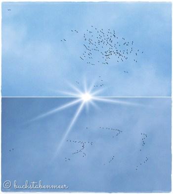 zugvögel2015