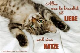KatzeLiebe